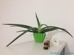 Pflanzen sorgen für eine bessere Raumluftqualität. Mit in der Top 10: Die Aloe Vera Pflanze