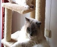 Infos und Tipps - Zwei Katzen im Haushalt halten - Erfahrungsbericht - Artikelbild