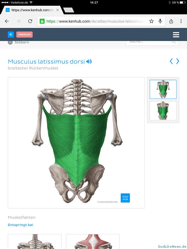 Gemütlich Lernen Anatomie Und Physiologie Kostenlose Online Galerie ...