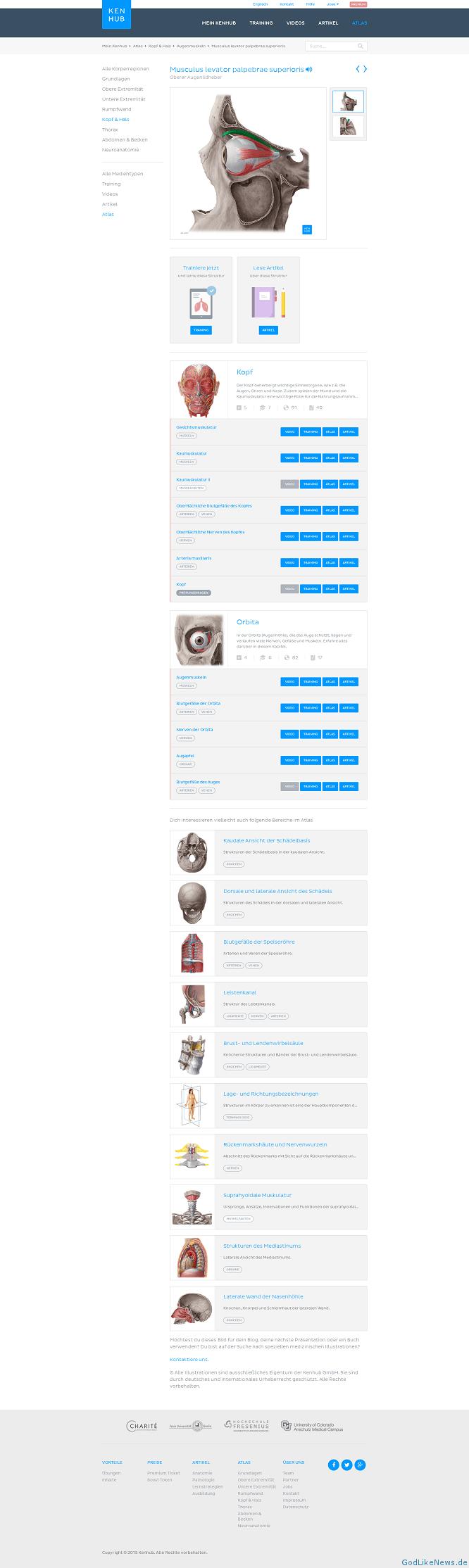 Niedlich Anatomie Und Physiologie Online Kostenlos Fotos - Anatomie ...
